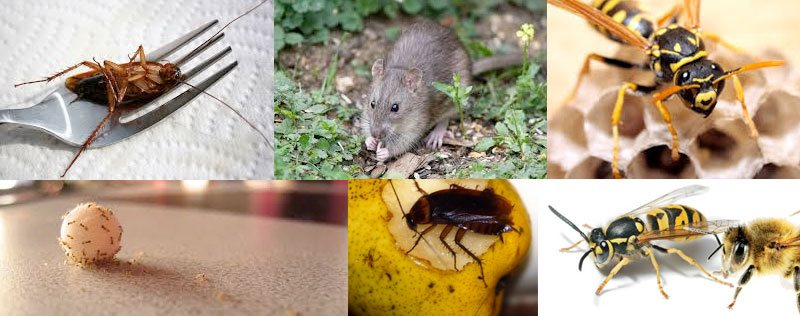 Pest Control Rous Mill