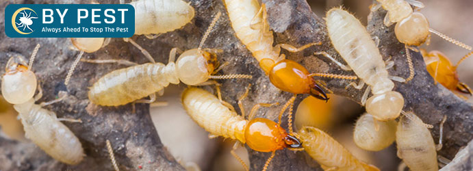 Termite Control White Mountain