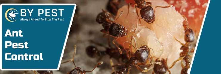 Ant Control Red Hill