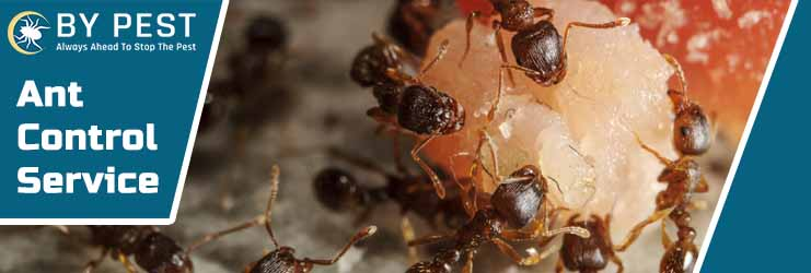 Ant Control Service Research