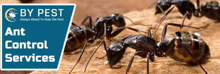 Ant Control Service North Willoughby