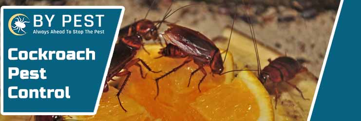 Cockroach Pest Control Applecross North