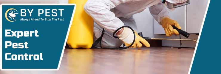 Expert Pest Control East Rockingham