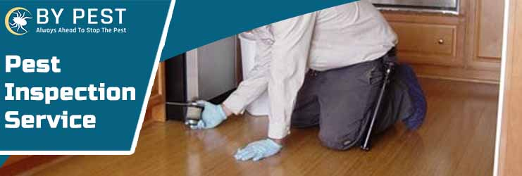 Pest Inspection Service Officer South