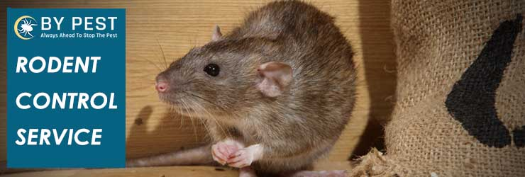 Rodent Control Burnley North