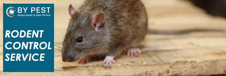 Rodent Control Picketts Valley