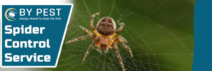 Spider Pest Control Ashbourne