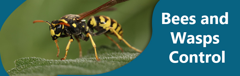 Bees and Wasps Control